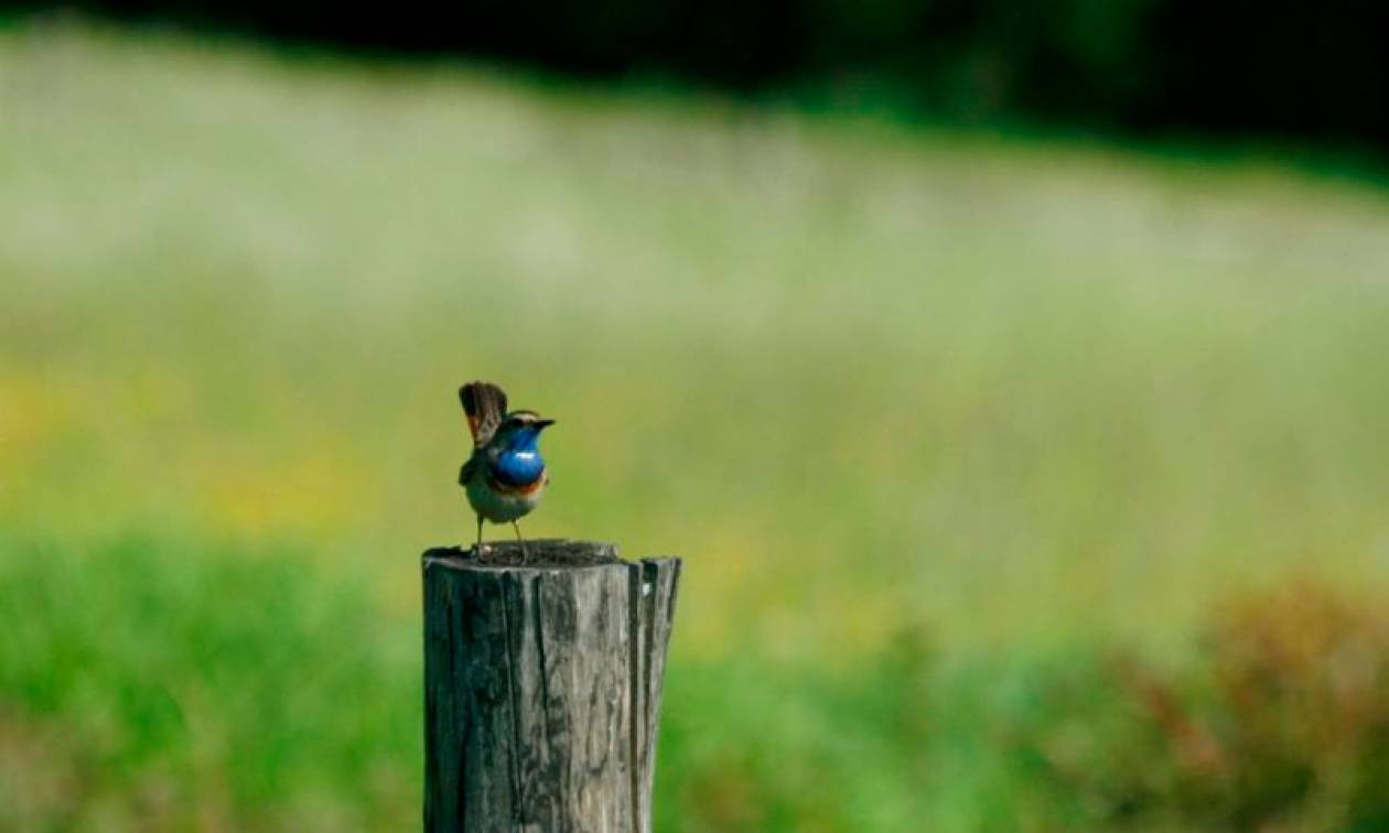 WWF: Μεγάλη αύξηση των περιοχών Natura στην Ελλάδα
