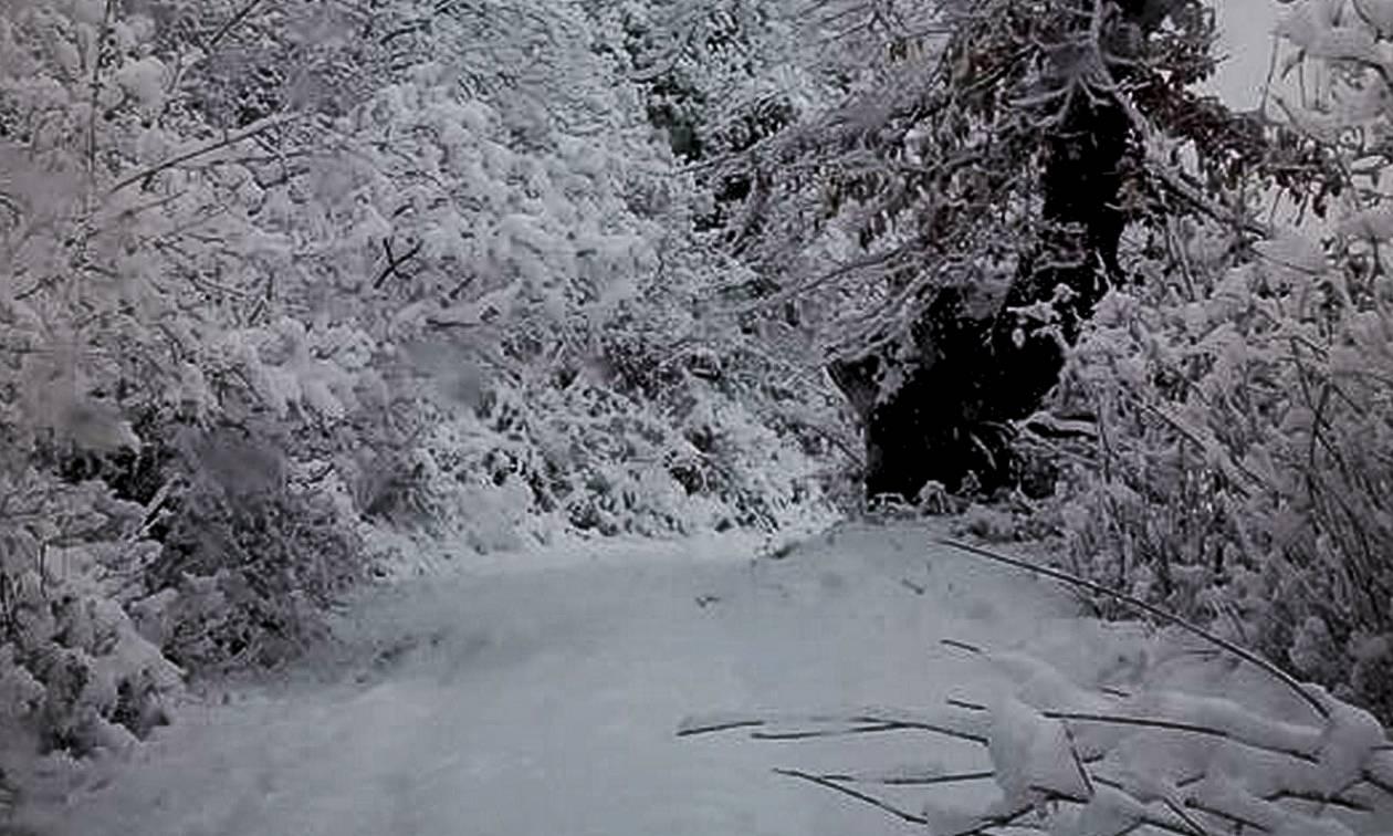 Νεκρή γυναίκα στο Αίγιο - Τη βρήκαν θαμμένη στο χιόνι