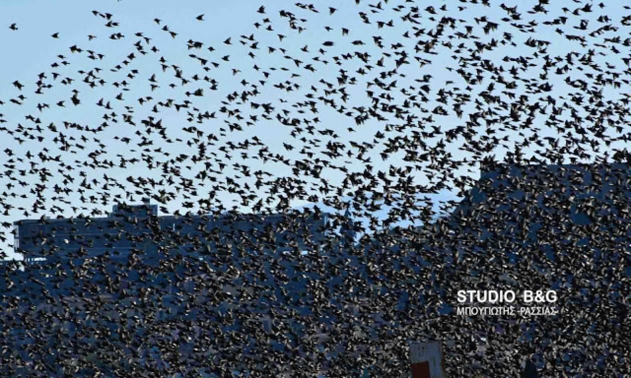Ναύπλιο: Απίστευτο «σόου» έστησαν εκατοντάδες πουλιά - Μαγικές εικόνες