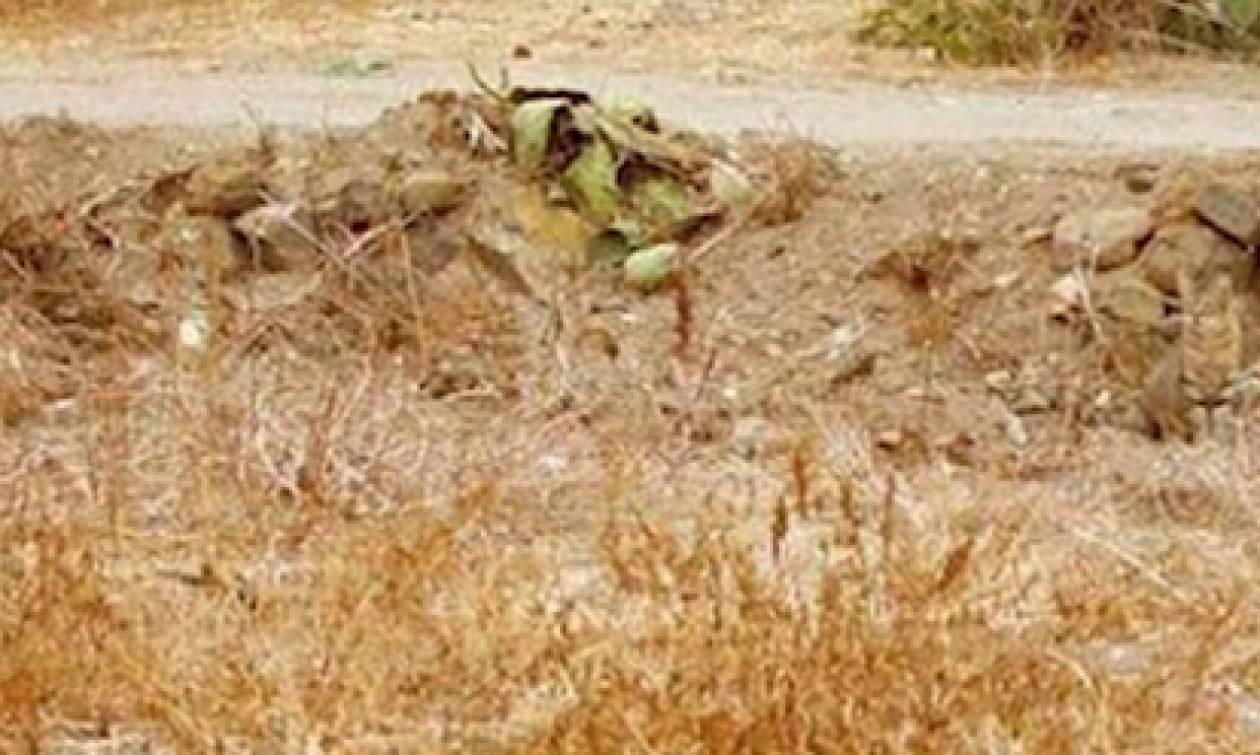 Σε αυτή τη φωτογραφία κρύβεται μια γάτα. Μπορείς να την εντοπίσεις σε 30 δευτερόλεπτα; (video)