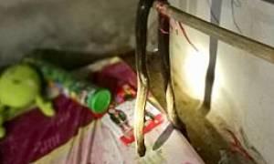 ΣΟΚ: Νεκρή 9χρονη - Την δάγκωσε κόμπρα ενώ κοιμόταν (pics)