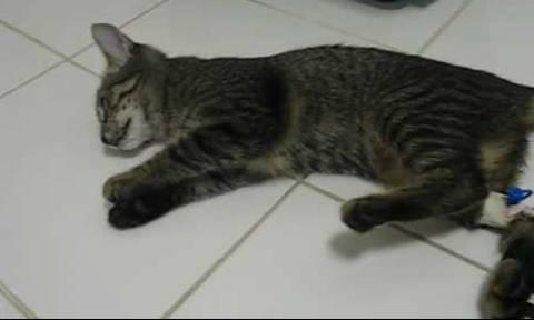Полиция Кипра расследует массовое отравление бездомных кошек