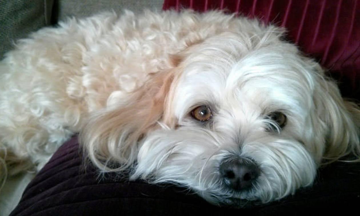 Συγκινητικό: Σκυλίτσα σχεδόν ξεψύχησε θρηνώντας τη νεκρή ιδιοκτήτριά της