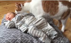 Πολύ γέλιο. Γάτες συναντούν για πρώτη φορά νεογέννητα μωρά (vid)