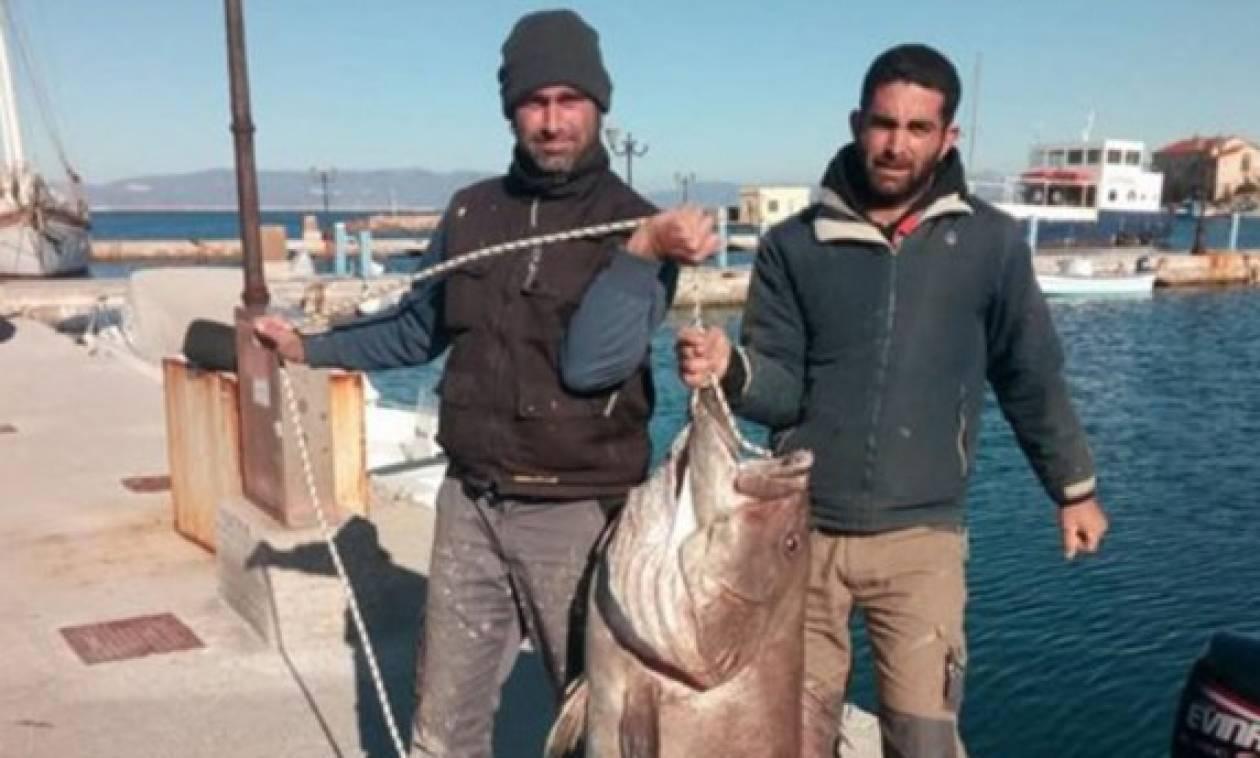 Απίστευτη ψαριά στη Σύρο! Έβγαλαν με καλάμι «θηρίο» 63 κιλών (vid)