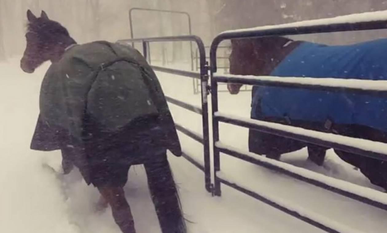 Αφησε τα άλογά του στο χιόνι για να παίξουν; Η αντίδρασή τους; Ξεκαρδιστική (video)