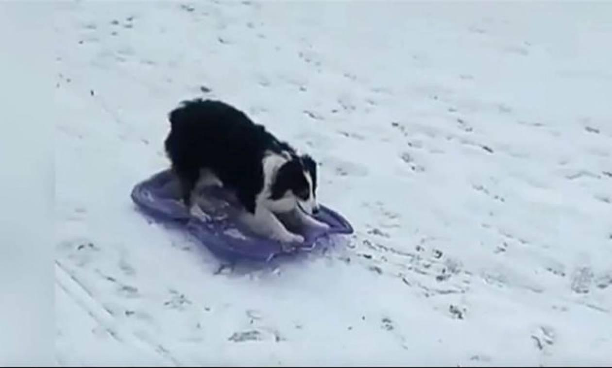 Απίστευτο βίντεο: Σκυλίτσα κάνει snowboard
