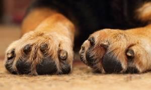 Φρίκη στην Ακράτα: Άγνωστος κρέμασε σκύλο σε αυλή σπιτιού