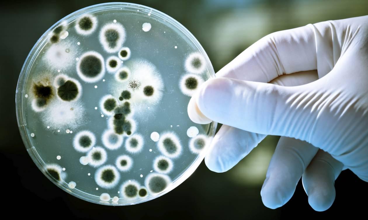 Σε αυτή την ηλεκτρική συσκευή του σπιτιού σας κάνουν... πάρτι βακτήρια και μύκητες