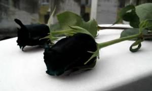 «Έφυγε» το γελαστό παιδί: Ανείπωτος πόνος για τον θάνατο του Παναγιώτη Γιαννικόπουλου