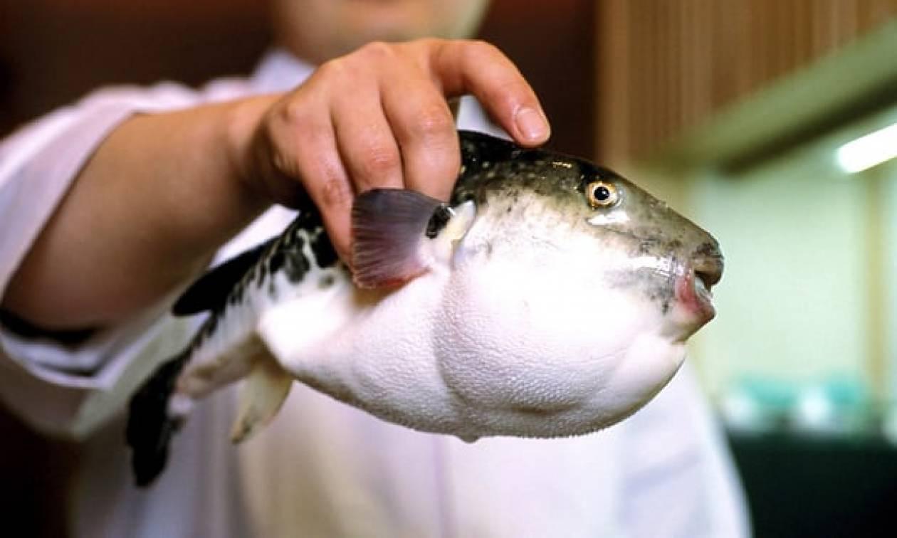 Ιαπωνία: Συναγερμός στις Αρχές - Πούλησαν κατά λάθος σε σούπερ μάρκετ δηλητηριώδες ψάρι