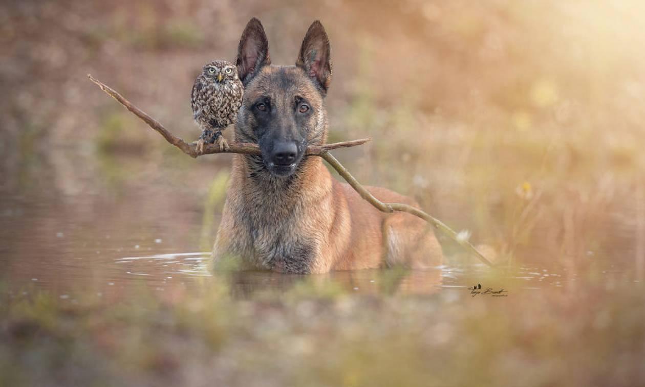 Viral: Η απίθανη φιλία ενός σκύλου και μιας κουκουβάγιας που θα σας συγκινήσει (Pics)