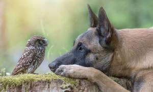 Μία παράξενη φιλία ανάμεσα σε σκύλο και κουκουβάγια κάνει το γύρο του διαδικτύου (pics)
