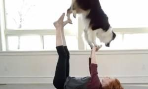 Αυτός ο σκύλος είναι εξπέρ στη γιόγκα (βίντεο)