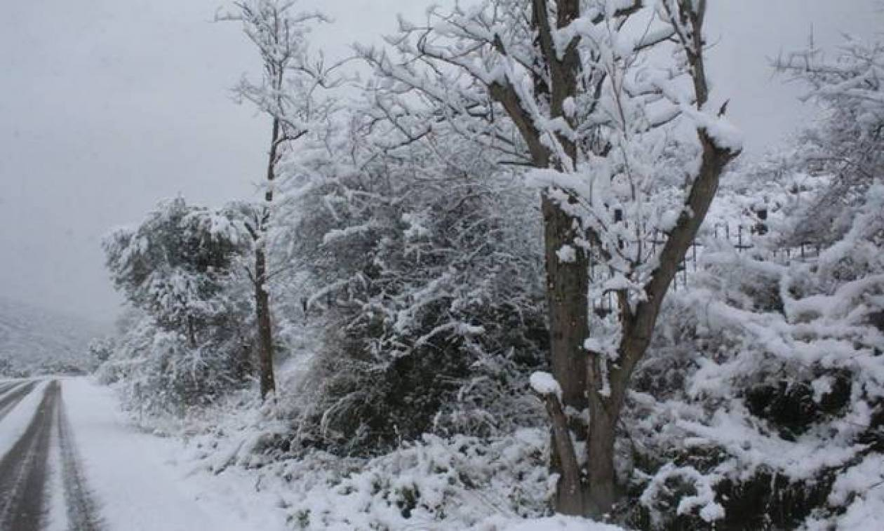 Καιρός τώρα: Με χιόνια, βοριάδες και τσουχτερό κρύο η Τρίτη (pics)