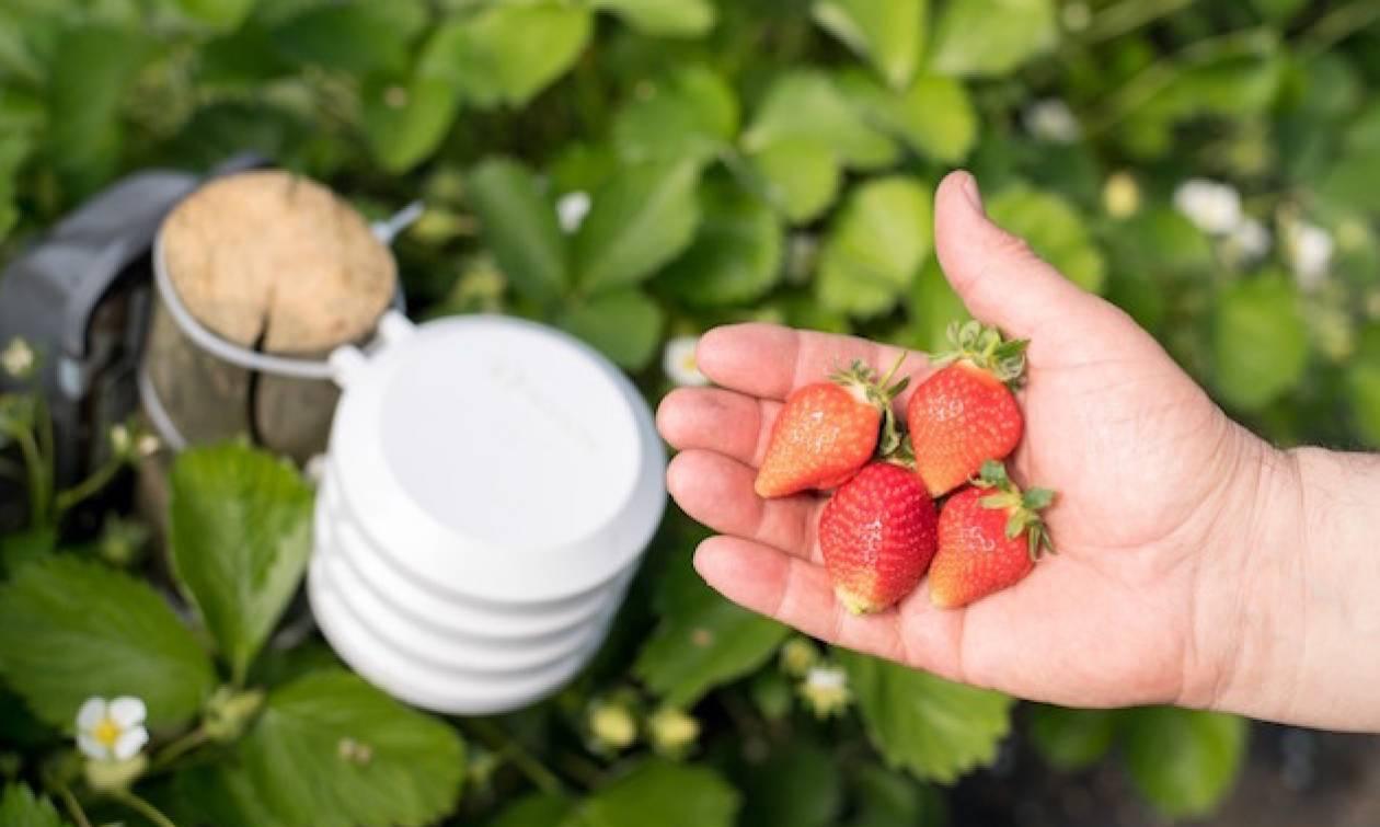 Έξυπνη γεωργία από την Bosch στην Agrotica 2018