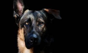 Άνθρωπος δαγκώνει σκύλο, σκύλος δαγκώνει άνθρωπο, άνθρωπος δέχεται ηλεκτροσόκ! Τι συνέβη; (Pics)