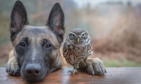 Έχετε ξαναδεί σκύλο να αγκαλιάζεται με κουκουβάγια; (pics)