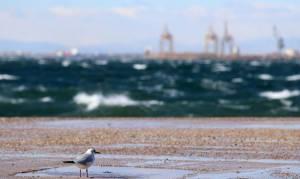 Κρήτη: Πήγαν χειμωνιάτικα σε παραλία – Αυτό που είδαν τους προκάλεσε σοκ (pics)