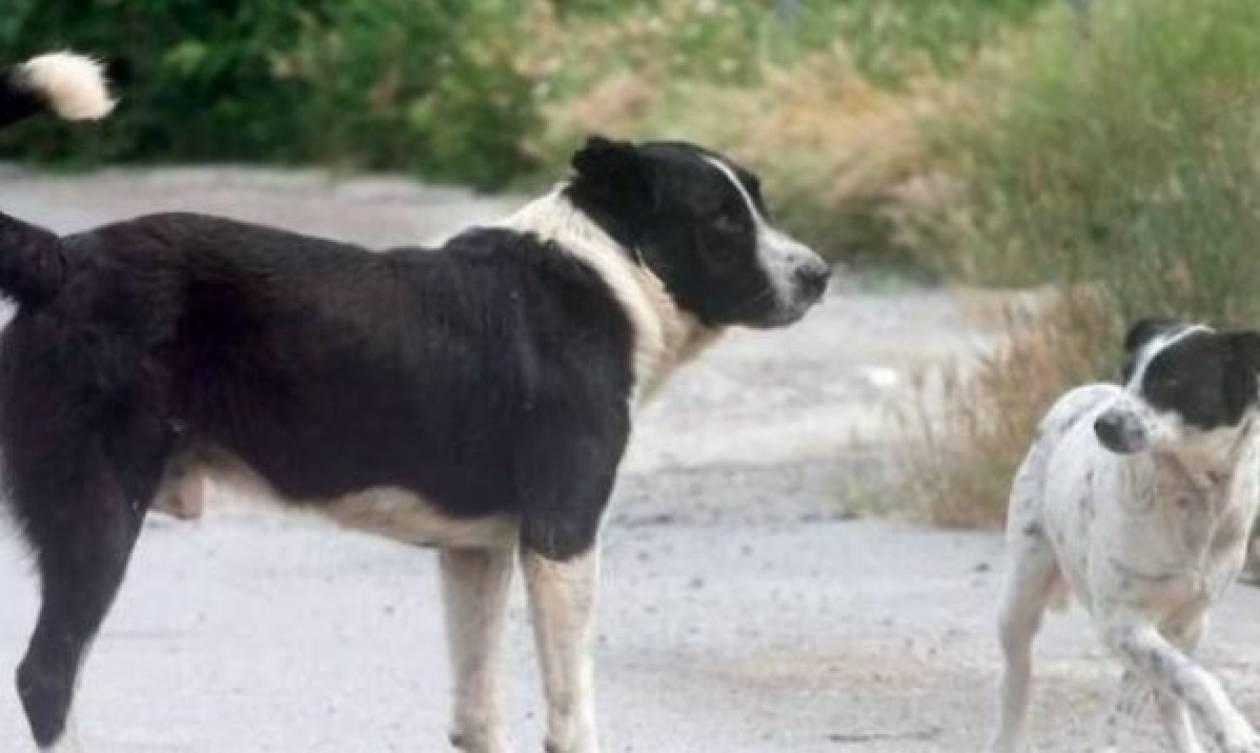 Πανικός στη Λαμία: Αδέσποτος σκύλος δάγκωσε στο πρόσωπο μικρό παιδί