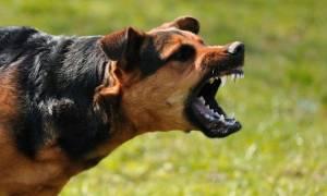 Σοκ στη Λαμία: Σκύλος δάγκωσε στο πρόσωπο 8χρονο αγοράκι