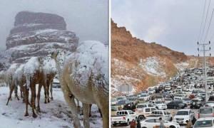 Πρωτόγνωρες εικόνες: Καμήλες «ντύθηκαν» στα... λευκά - Χιόνισε στη Σ. Αραβία! (pics+vid)