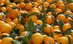 Προσοχή: Κατασχέθηκαν 10 τόνοι ακατάλληλων φρούτων στον Πειραιά