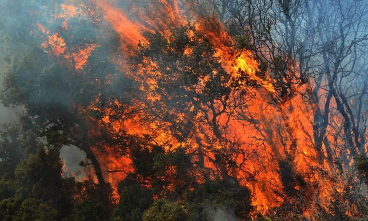 Συναγερμός στο Λασίθι: Φωτιά κοντά σε μοναστήρι