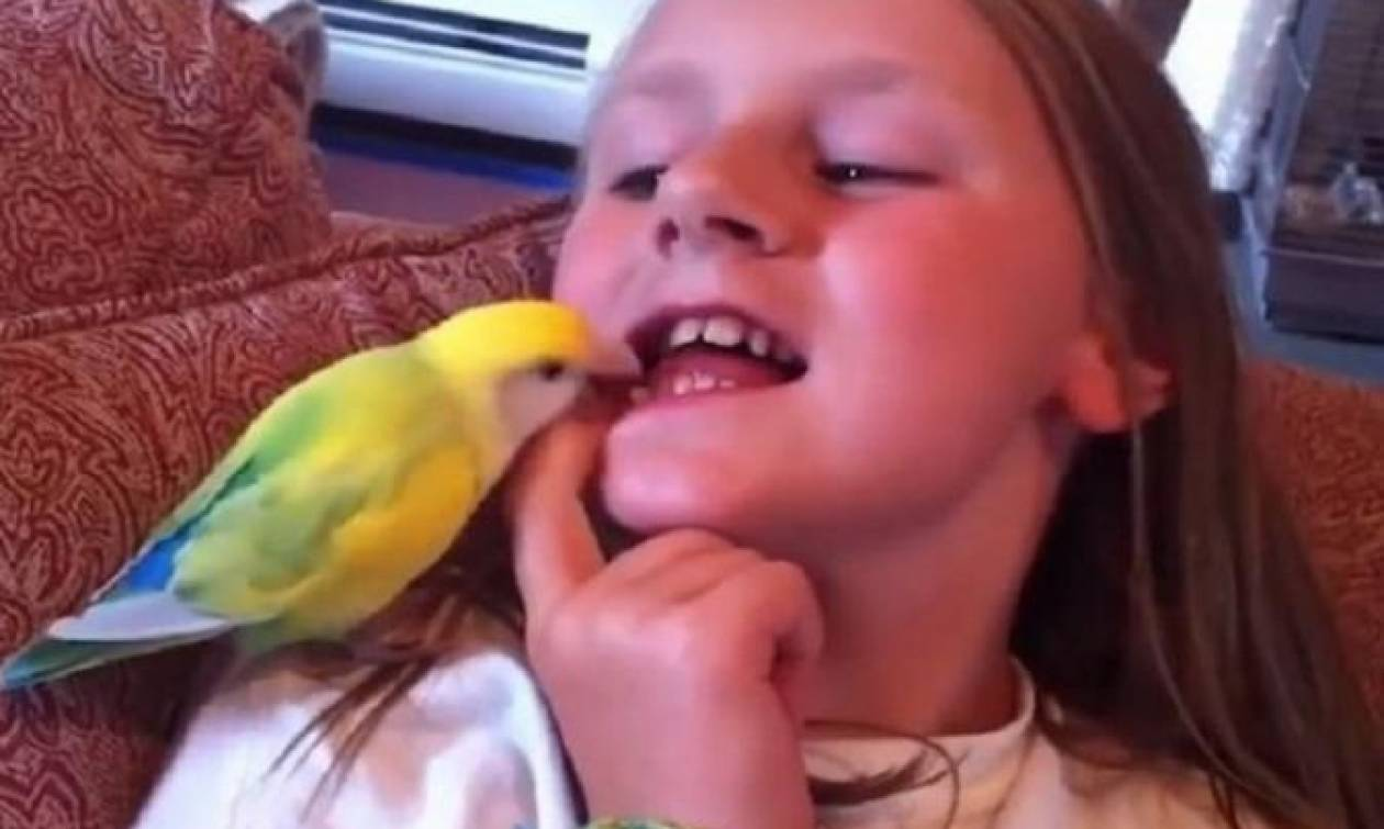 Παπαγάλος έβγαλε το δόντι παιδιού με μία κίνηση! (video)