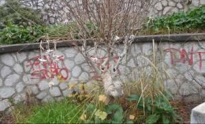 Τρόμος στην Πάτρα: Παγανιστικές τελετές φοβούνται οι κάτοικοι (pics)