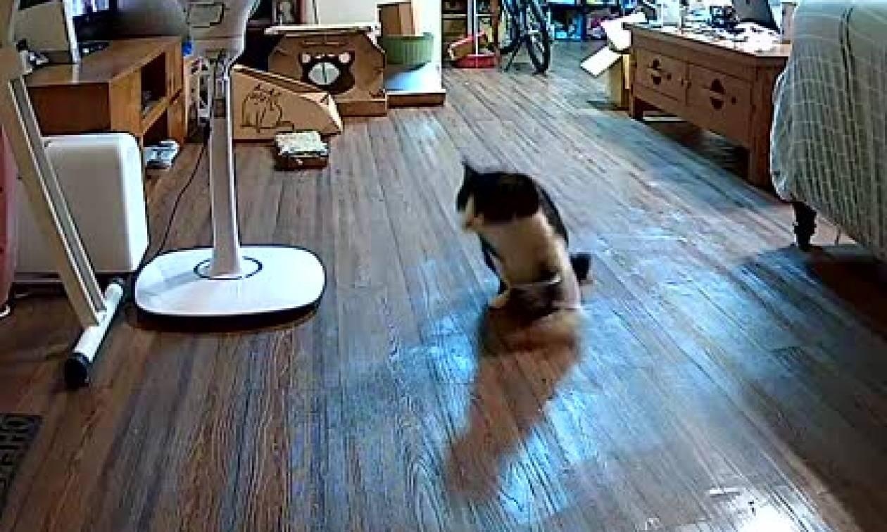 Παράλυτος γάτος «τρελαίνεται» όταν νιώθει την άφιξη του ανθρώπου που του έσωσε τη ζωή (Video)