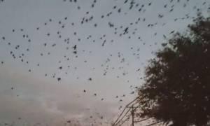 Σκοτείνιασε ξαφνικά ο ουρανός! Οι οδηγοί παράτησαν το τιμόνι και χάζεψαν με το θέαμα (video)