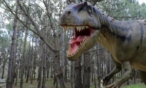 Οι δεινόσαυροι περπατούν στην... Πορτογαλία (pics)