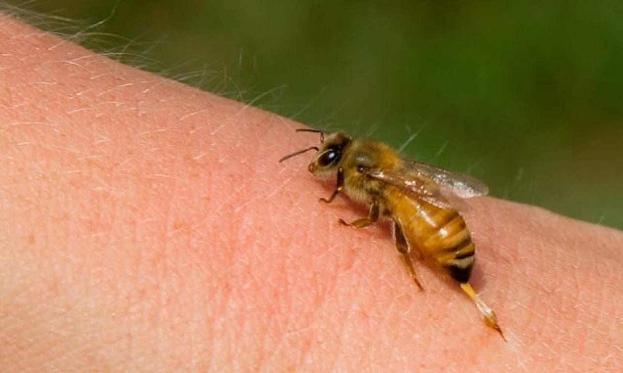 Τραγωδία στην Κρήτη: Έφυγε από τη ζωή από τσίμπημα μέλισσας