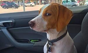Η κρίσιμη στιγμή! Αυτοί οι σκύλοι συνειδητοποιούν ότι δεν πηγαίνουν βόλτα αλλά στον κτηνίατρο (pics)