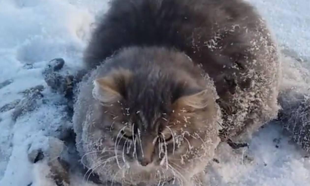 Βρήκαν αυτήν τη γάτα παγωμένη! Και έκαναν τα πάντα για να της σώσουν τη ζωή (video)