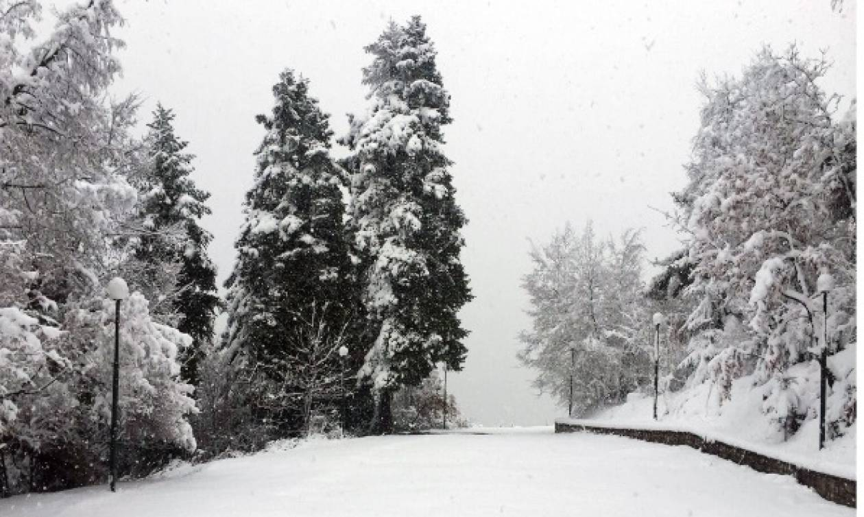 Κακοκαιρία - «Ιοκάστη»: Στα λευκά τα ορεινά της Κοζάνης (pics)