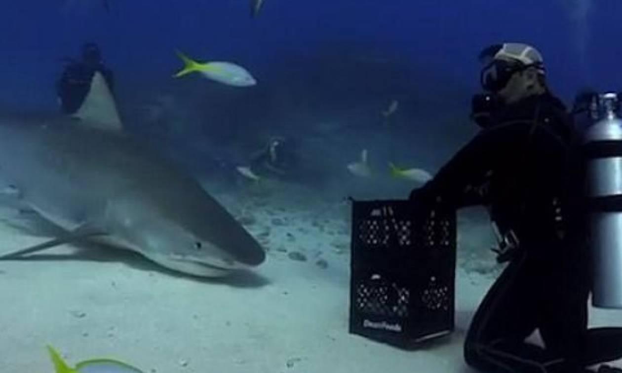 Δύτης συναντά καρχαρία στο βυθό. Αυτό που ακολουθεί δεν το λες... φυσιολογικό (video)