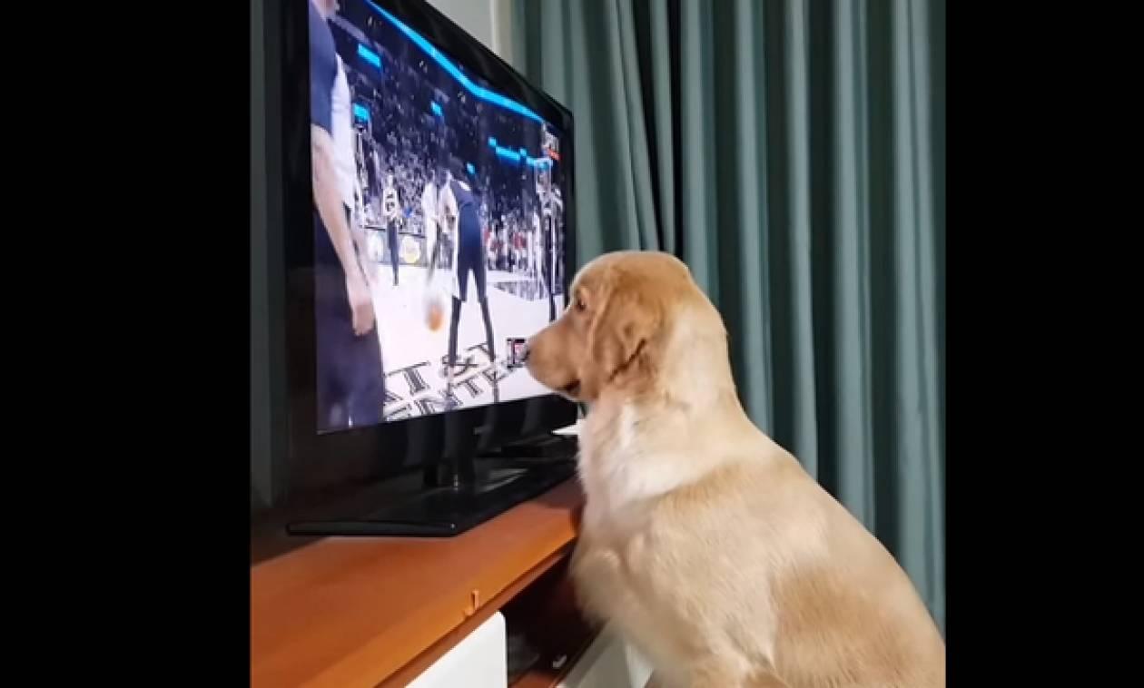 Πολύ γέλιο! Αυτός ο σκύλος βλέπει φανατικά NBA (video)