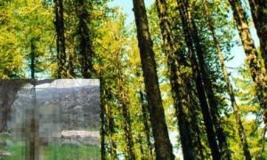 Εικόνα που σοκάρει: Βρήκαν αλεπού κρεμασμένη σε δέντρο (Σκληρές εικόνες)