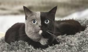 Αυτή είναι η γάτα με τα δύο πρόσωπα! (pics)