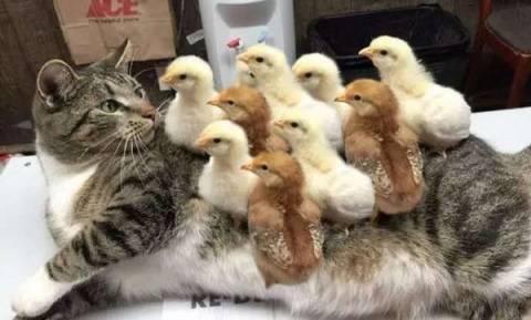 Οι πιο παράξενες φιλίες ζώων, που μας αφήνουν άφωνους (pics)