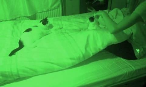 Όταν η γάτα σου, αρνείται να σε αφήσει να κοιμηθείς! (video)