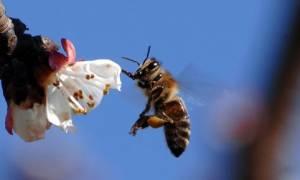 Κρήτη: Το τσίμπημα της μέλισσας παραλίγο να του στοιχίσει τη ζωή