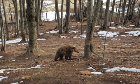 Bears wake up from hibernation at Arcturos sanctuary