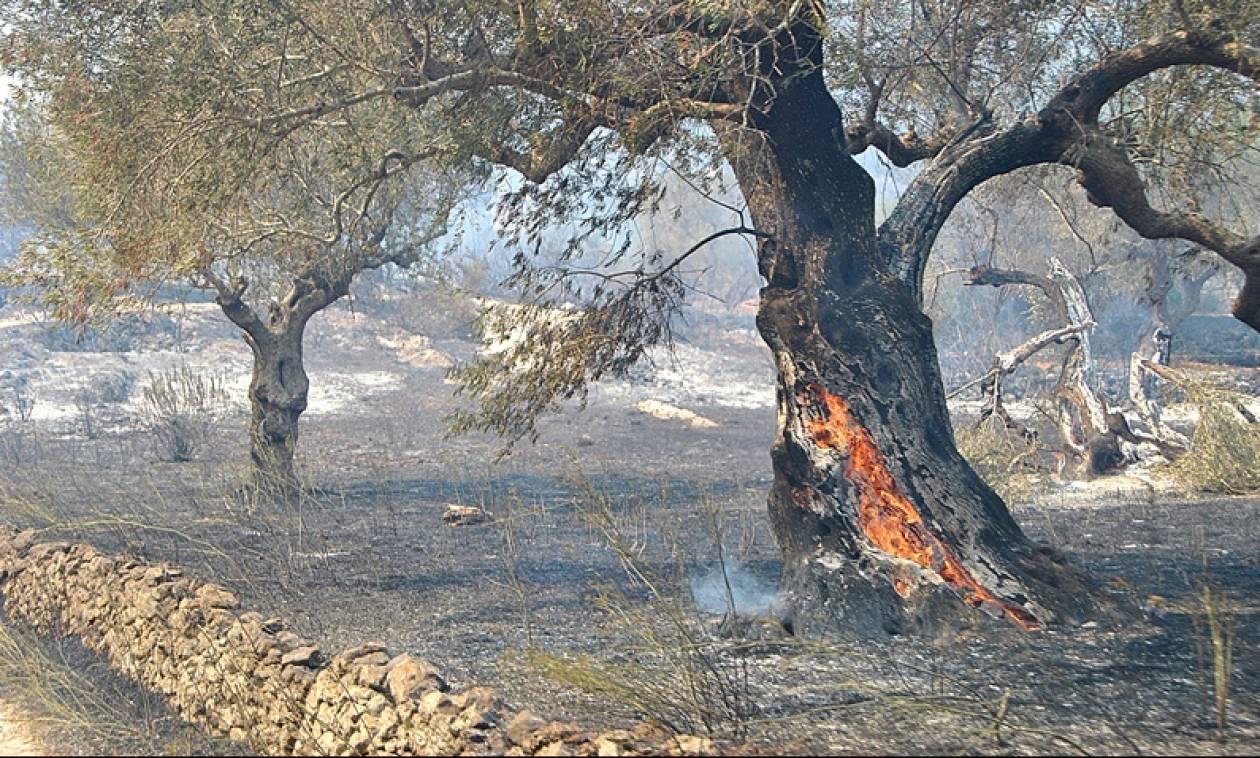 Οικονόμου: Ακόμα να δοθούν οι αποζημιώσεις για τις περσινές πυρκαγιές στη Ζάκυνθο