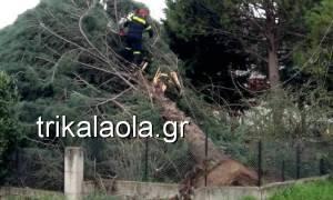 Σφοδρή ανεμοθύελλα έπληξε τα Τρίκαλα - Ξεριζώθηκαν δέντρα, ξηλώθηκαν σκεπές (vid)