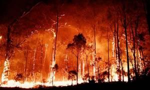 Πύρινη «κόλαση» στην Αυστραλία: Στάχτη δεκάδες σπίτια, στις παραλίες κατέφυγαν οι κάτοικοι (video)