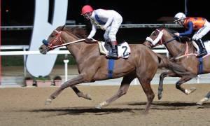 Το Κύπελλο 25ης Μαρτίου σήμερα στο Μαρκόπουλο - Πέντε ιπποδρομίες με έντονη αγωνιστική δράση