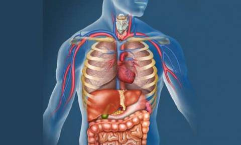 «Βόμβα»: Ανακαλύφθηκε νέο όργανο στο ανθρώπινο σώμα - Η σχέση του με την εξάπλωση του καρκίνου